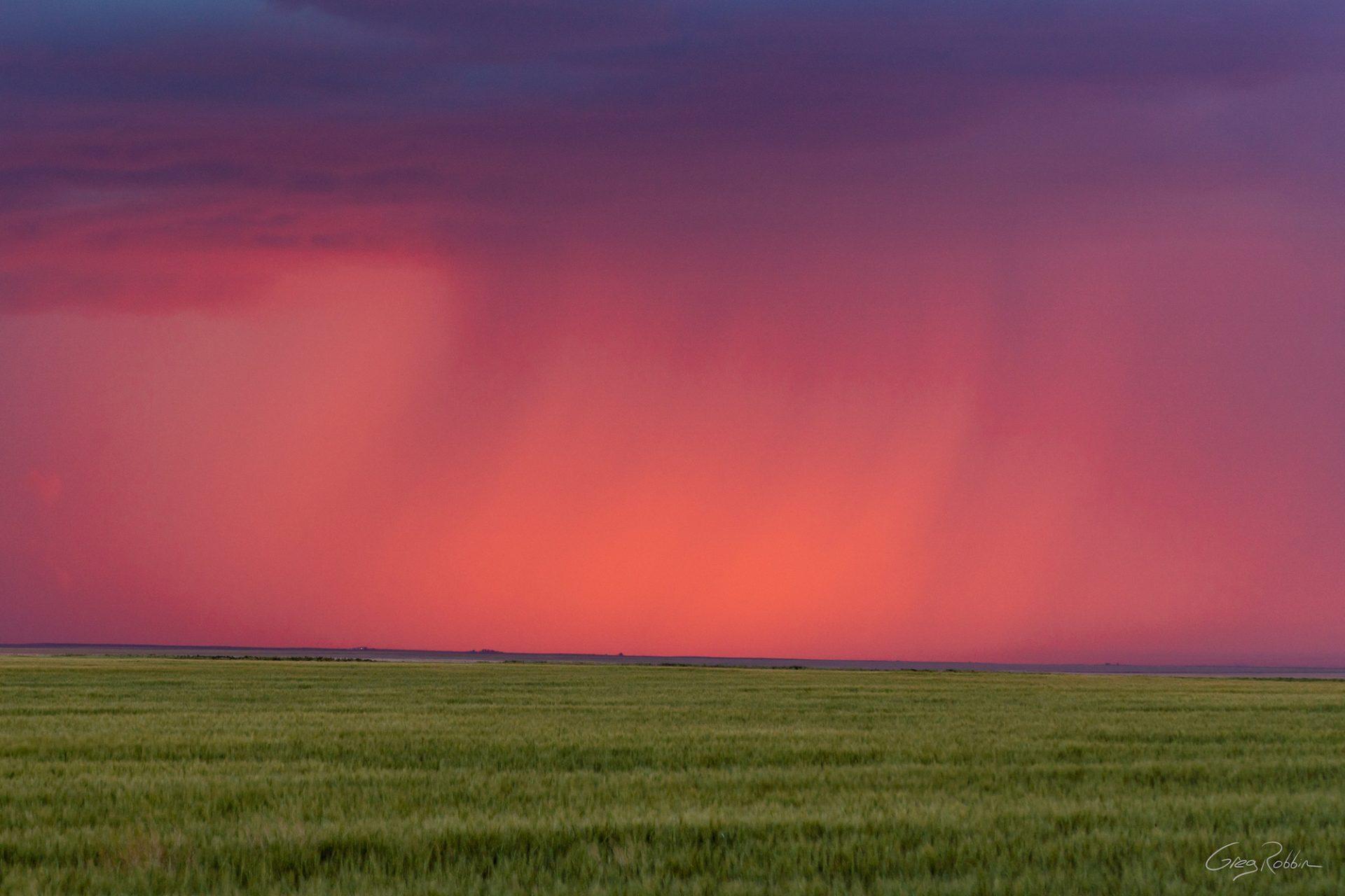 A Study in Pink –Colorado